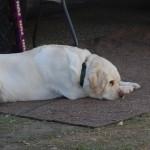 gunner tired
